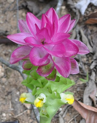realjoypeurtoricowildflower